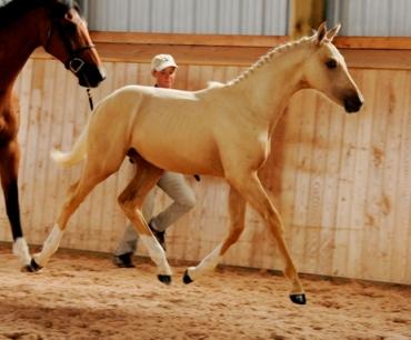 Blazing Colours Farm S Foals